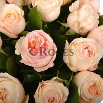 """""""Marcella"""" 15 roses"""